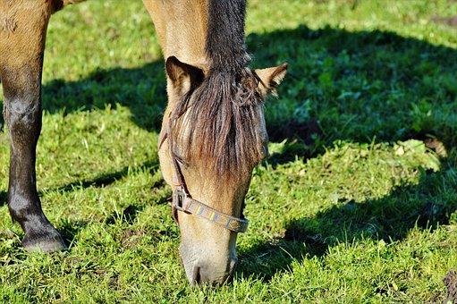 Horse, Pferdeportrait, Horse Head, Pasture, Brown