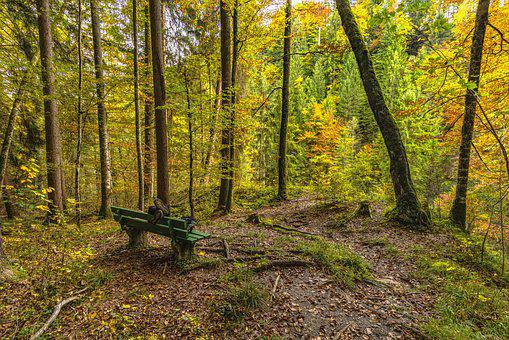 Forest, Bank, Autumn, Rest, Tranquility Base, Click