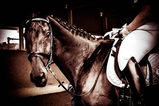 Horse, Rap, Equestrian, Show, Dressage, Competition