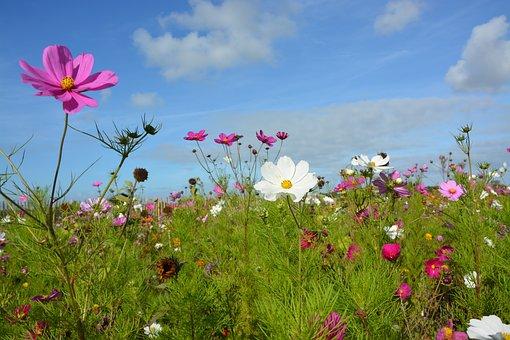 Flowers, Corner Rustic, Nature, Garden