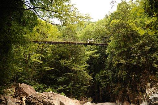 Forest, Suspension Bridge, Green, Rock