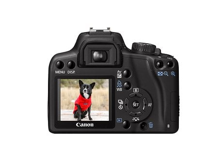 Camera, Dog, Picture, Image, Exposure, Posing, Sitting