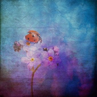 Texture, Background, Ladybug, Forget Me Not, Flowers