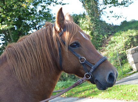 Horse, Mare, Filly, Equine, Broodmare, Prairie