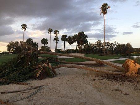 Hurricane, Storm Damage, Storm, Damage, Nature, Tree