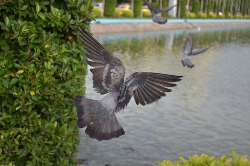 Birds, Animals, Bird Framingham Bingo, Nature, Poultry