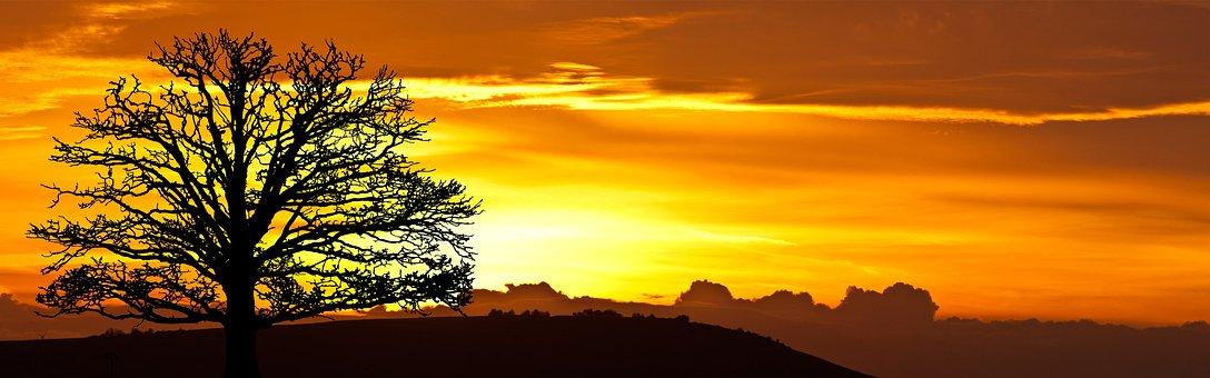 Sunrise, Tree, Nature, Sky, Sun, Landscape, Silhouette