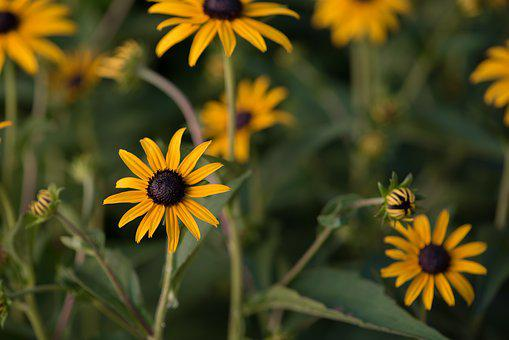 Kúpvirág, Flower, Plant, Summer, Flower Garden, Bloom