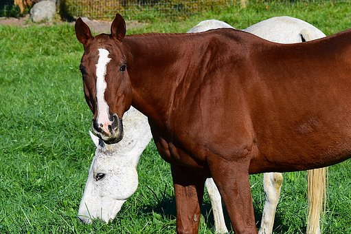Horse, Brown, Painted, White, Farm, Animal, Stallion