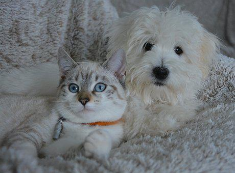 Dog, Cat, Animals, Dog Cat, Domestic Animal, Pets