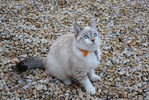 Cat, Kitten, Pussy, Cat Sitting, Domestic Animal, Kitty