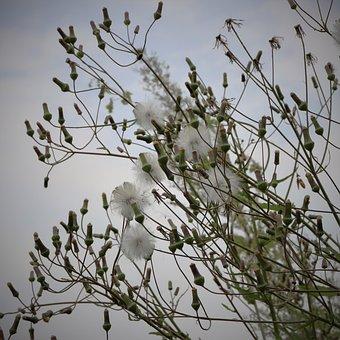 Flower, White, Pure, Clean, Unknown, Fur, Light, Season