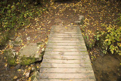 Walkway, Wood, Nature, Trees, Foliage, Green, Autumn