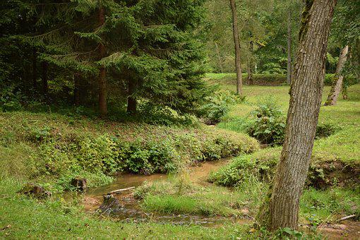 Creek, Forest, Nature, Landscape, Water, Stream, Park