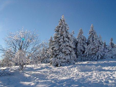 Goslar, Torfhaus, Snow, Resin, Winter, Wintry
