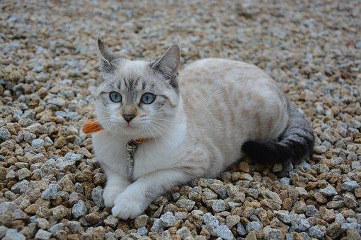 Cat, Kitten, Sunset, Cat Eyes, Feline, Baby Cat