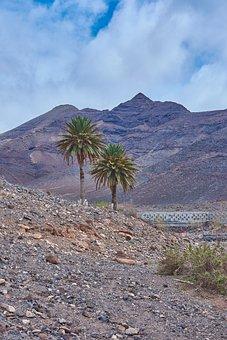 Palm, Oasis, Desert, Karg, Stones, Sky, Wölken, Blue