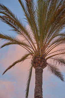 Palm, Mood, Sky, Evening Sky, Atmosphere, Afterglow