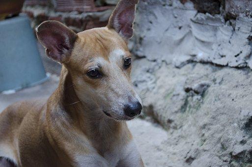 Faithful Friend, Dog, Pet, Mixed Breed Dog, Animal