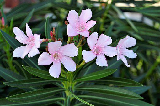 Flowers, Pink, White, Grass, Leaves, Pink Flowers