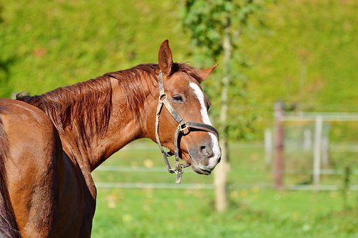 Horse, Ride, Reiter, Equestrian, Coupling, Animal, Head