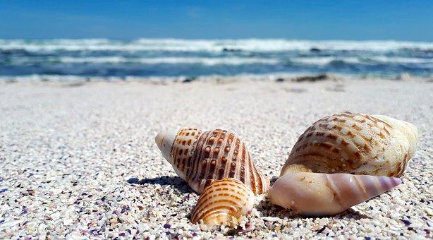 Shells, Shell, Sand, Sea, Nature, Beach, Seashell