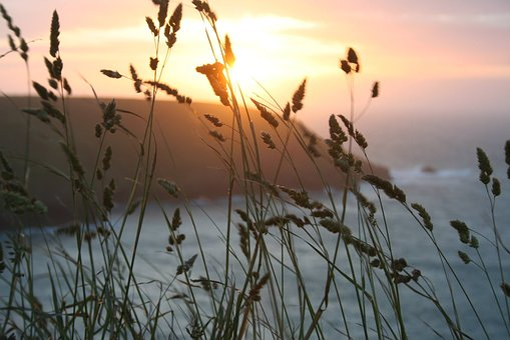 Sunset, Wheat, Summer, Nature, Landscape, Harvest