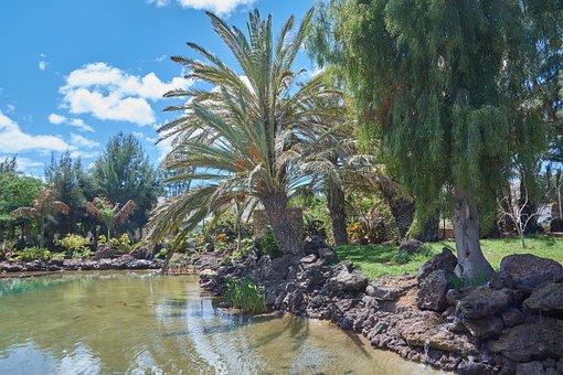 Oasis, Palm Trees, Water, Canary Islands, Sun, Sky