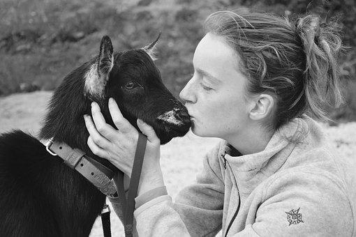 Kisses, Kiss, Girl, Young Female Goat, Kiss A Goat