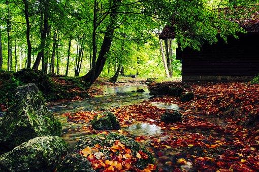 Creek, Autumn, Fall Leaves, Autumn Forest, Promenade