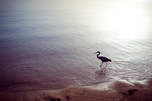 Sea, Bird, Vacation, Summer, Beach, Birds, Bay, Sand