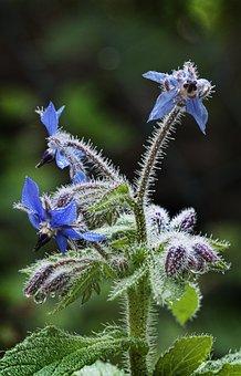 Cranesbill, Geranium, Blossom, Bloom, Back Light, Dew
