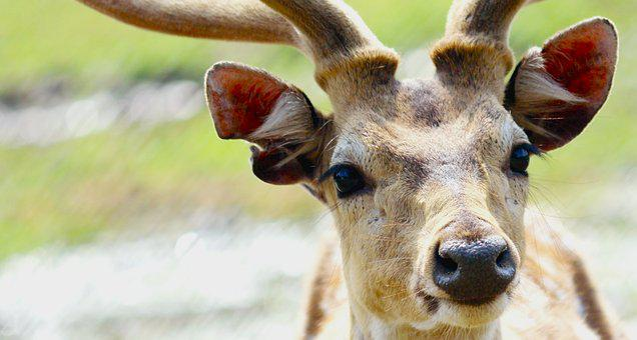 Cervidae, Portrait, Animal, Deer, Wild, Wildlife