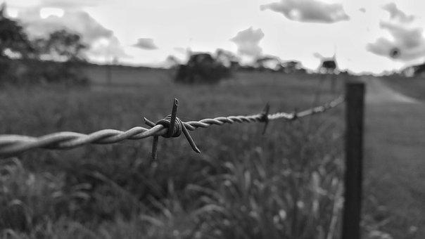 Barb Wire, Fence, Black And White