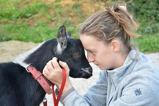 Young Girl Young Woman, Goat, Complicity, Hug, Look
