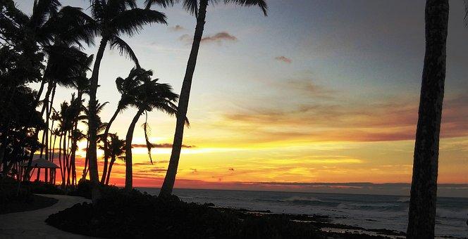 Hawaii, Sunset, Palm Trees, Travel, Vacation, Ocean
