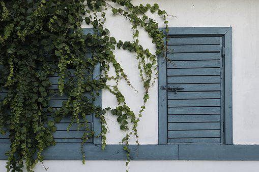 Door, Facade, Green, Home, House, Ivy, Plant, Wall