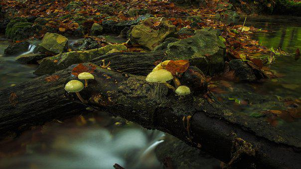 Bach Leek, Mushrooms, Log, Long Exposure, Tree Fungus