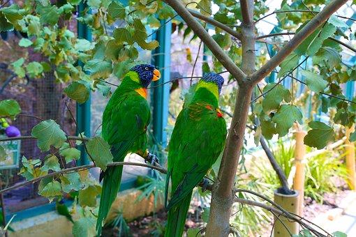 Parrots, Love, Bird, Wildlife, Nature, Tropical, Animal