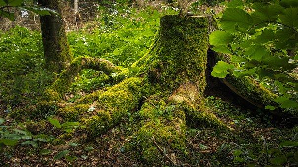 Tree Stump, Moss, Forest, Bemoost, Green, Log, Nature