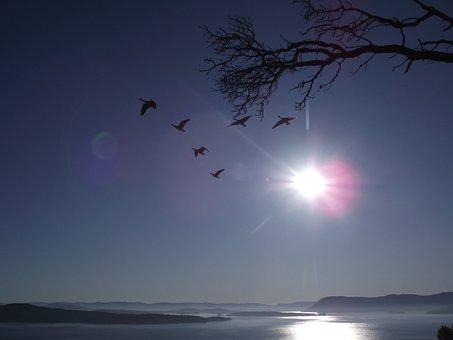 Gulf Islands, Ocean, Birds, Tree, Sun, Overexposure