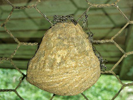 Bees, Nest, Chicken Wire, Outdoors, Tree, Closeup