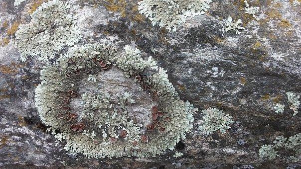 Whorls, Stone, Moss, Patterns, Grey, Green, Nature