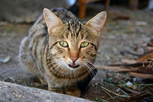 Cat, Pets, Sweet, Whisker, Animal Portrait, Kitty