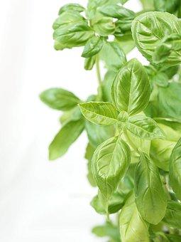 Basil, Aroma, Italian, Spice, Herbs, Food, Eat, Healthy