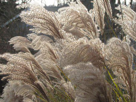 Grass, Wind, Swaying, Fluffy, Blowing