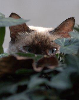 Cat, Eye, About, Hidden, Leaves