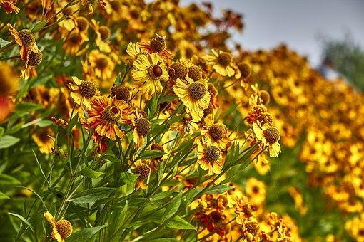 Flowers, Autumn, Nature, Plant, Golden Autumn