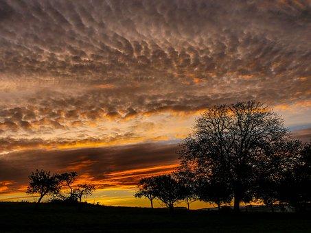Morgenrot, Sunrise, Trees, Glow, Landscape, Skies, Sun