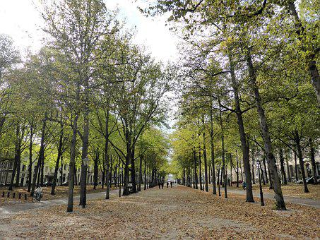 Nature, Autumn, Herfsttafreel, Leaves, Fall Colors